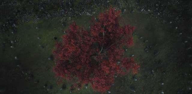 شجرة ميلاد اول سائر موتى
