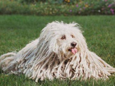 كلب مارك زوكربيرج