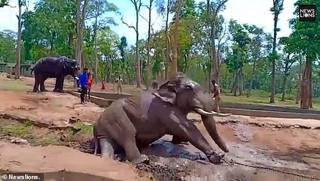 الفيل دارنوا  (2)