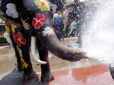 مهرجان رش الأفيال