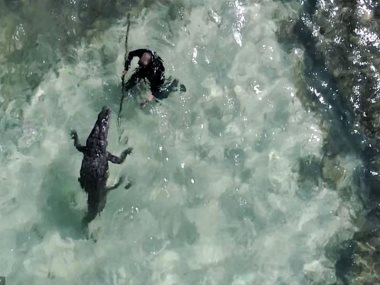مصور يسبح مع التماسيح