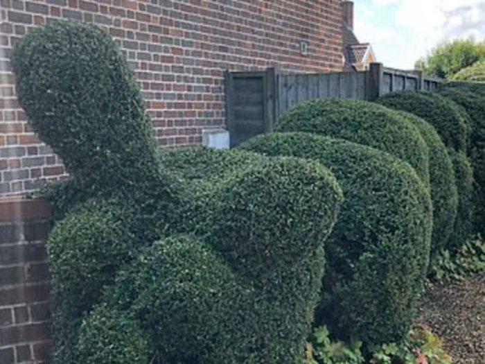 تنسيق حدائق المنازل