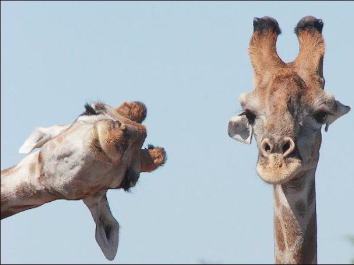 صور مضحكة لحيوانات
