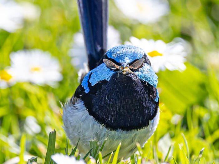 طائر بنظارة شمسية