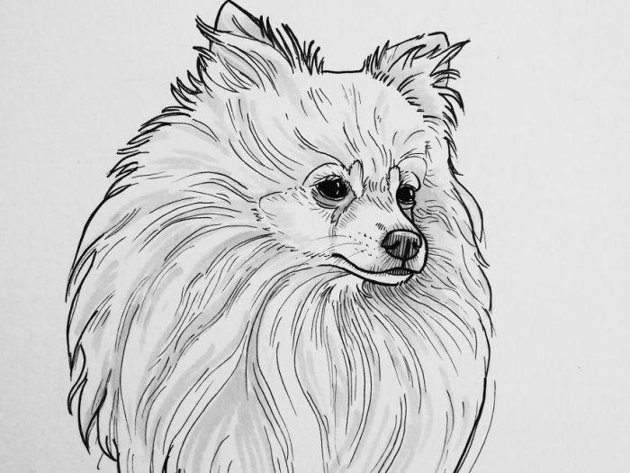 رسمة كلب