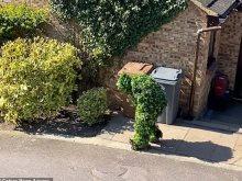 بريطانى يتخفى فى شكل شجرة