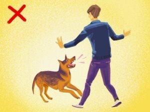 لو تعرضت لهجوم من كلب الشارع.. اوعى تبتسم ومتبصش لعينيه