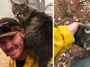 رجل مطافى ينقذ قطة من نار شمال كاليفورنيا ويبحث عن صاحبها