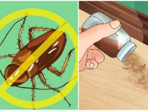 طرق للتخلص من حشرات المنزل.. بصل وبكينج بودر وفلفل وقرفة